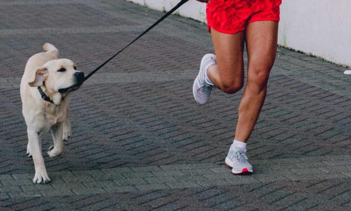 Dog running leash